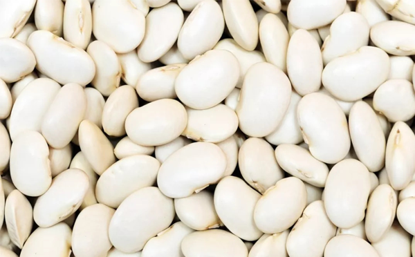 芸豆不能和什么一起吃