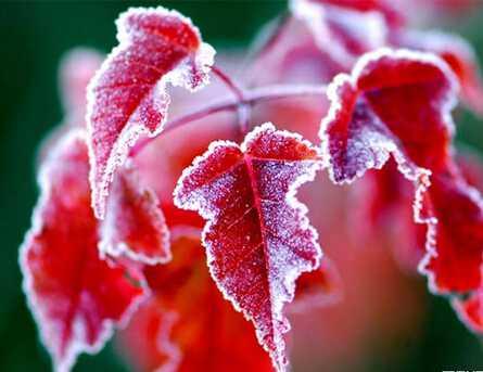 霜降做好保暖冬季不易生病