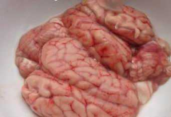 猪脑不能和什么一起吃