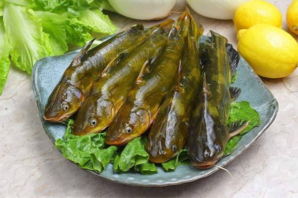 黄骨鱼不能和什么一起吃