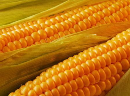 得了高血脂还可以吃玉米吗