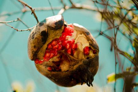 孕妇吃石榴好吗?