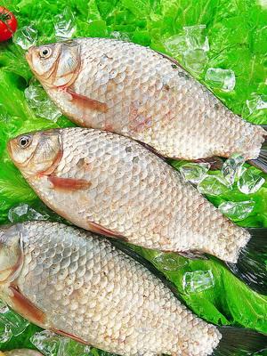 鲫鱼的功效作用与食疗应用