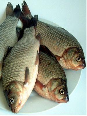鲫鱼的食疗功效与治病验方