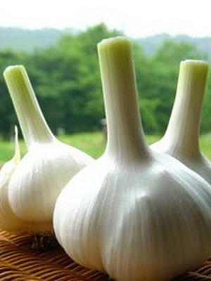 大蒜的食疗功效与治病验方