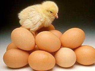 鸡蛋不能和什么一起吃? 这几类人吃鸡蛋等于吃毒药! 说的可能就是你!