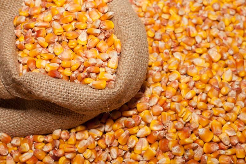 玉米,煮玉米