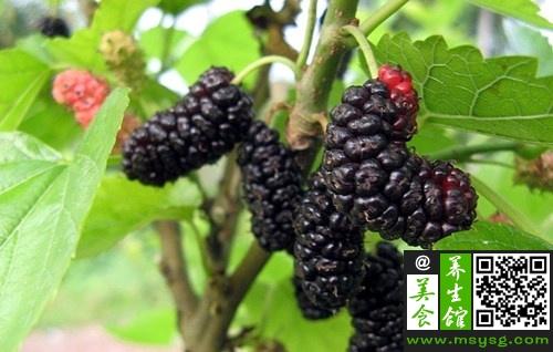 盘点七种紫色食物防癌抗衰老  (5)