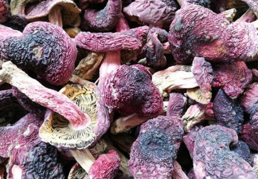 红菌菇的功效与作用